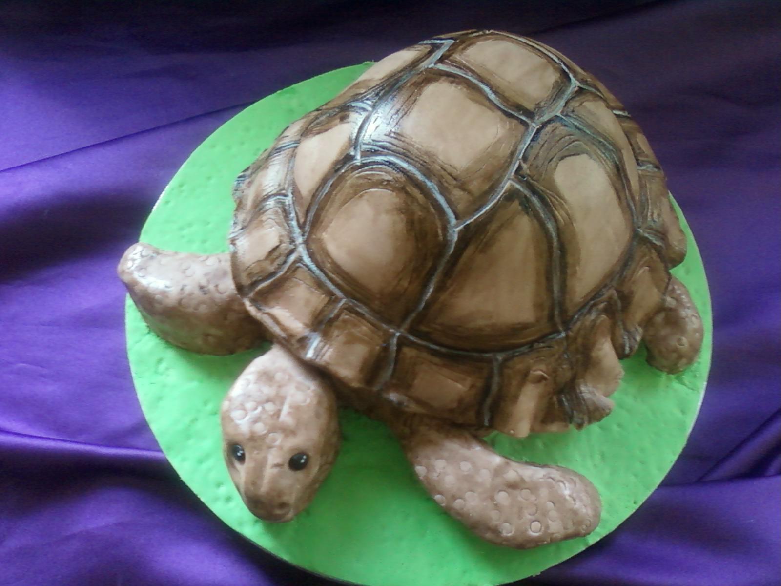 Turtle Birthday Cakes