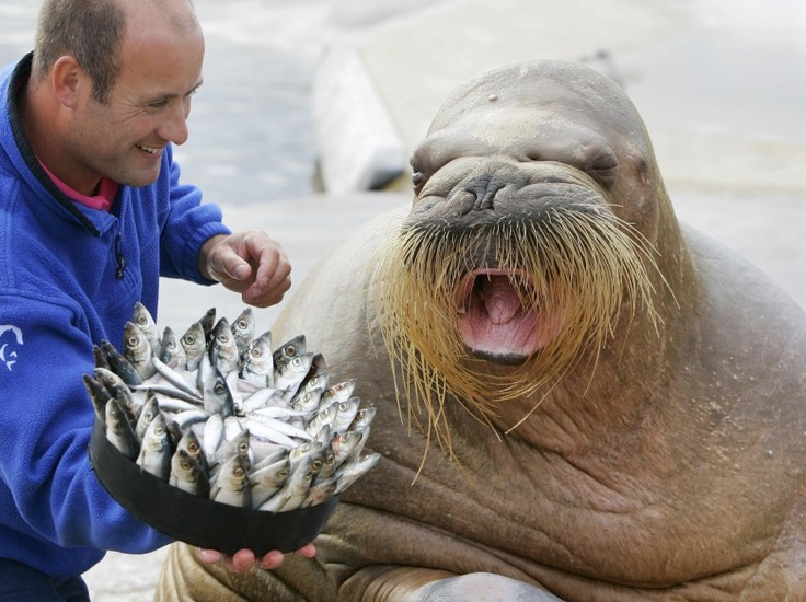 Walrus Birthday Cakes