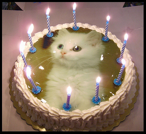 A Birthday Cake For My Cat Flickr Photo Sharing